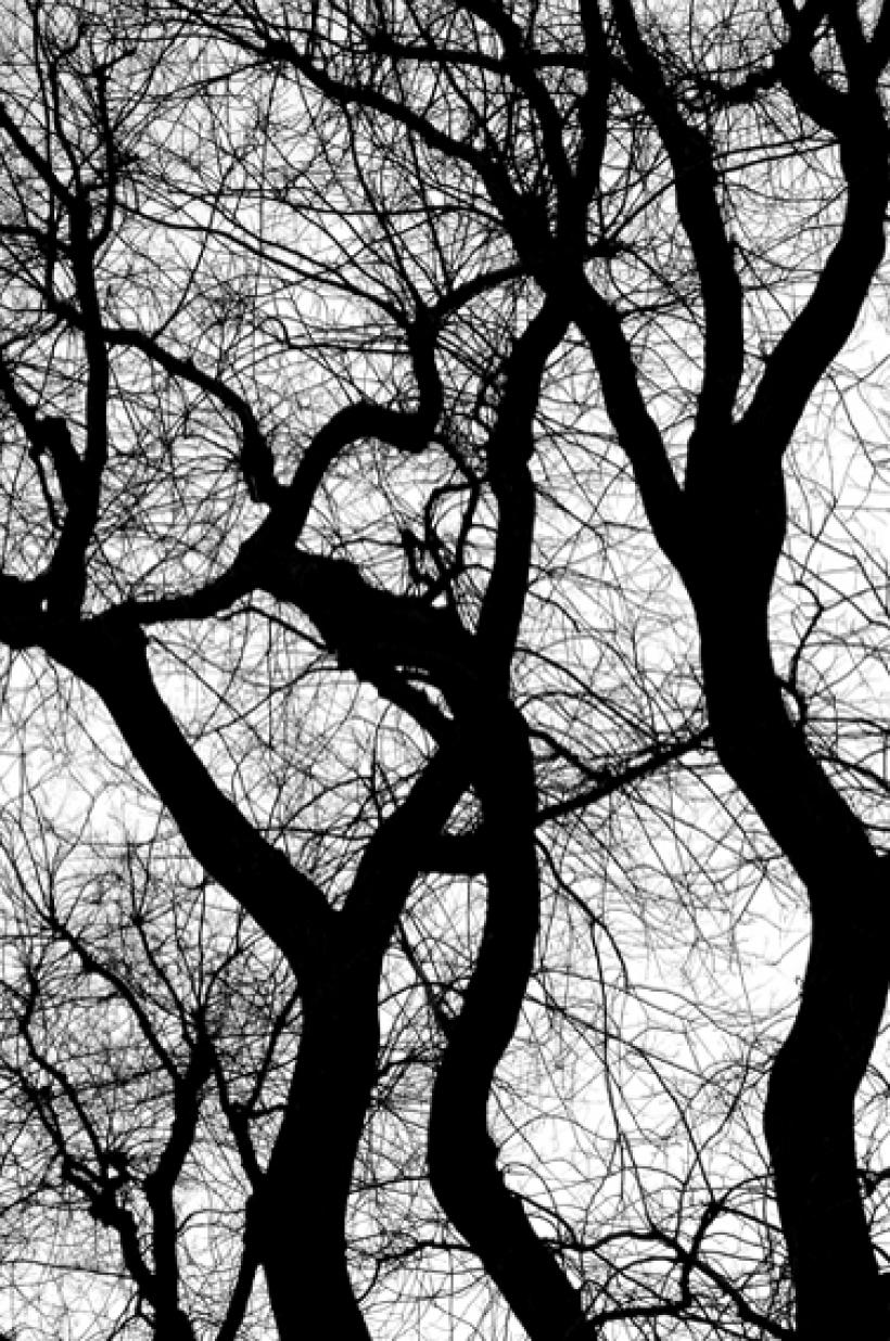 8 . Esprits de l'arbre